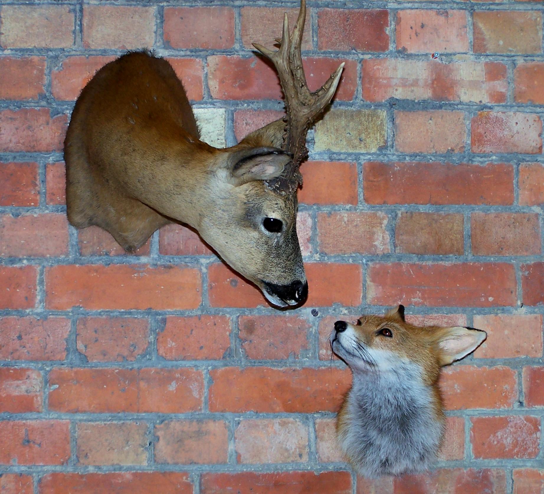 deer/roefox.jpg